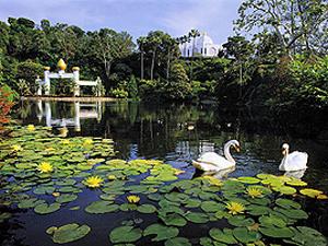 Lilie pond