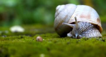 white-snail-1120x600